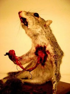 weird taxidermy | awful dead animals 09 Funny: When taxidermy goes wrong