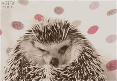 Now you've seen a hedgehog smiling. You're welcome.