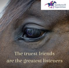 Horse Inspiration, Horse eyeHorses are amazing listeners. True Friends, Best Friends, Horse Wall Decals, Inspirational Horse Quotes, Equestrian Quotes, Horse Rugs, Barn Animals, Riding Quotes, Horse Riding Clothes