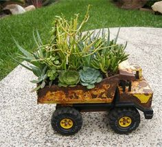 Old dump truck now hauls succulent around...please don't dump my succulent...will make me sad!! So neat!!