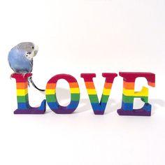 blue birb says: respect trans lesbians or PERISH Budgie Parakeet, Cockatiel, Budgies, Parrots, Funny Birds, Cute Birds, Cute Baby Animals, Farm Animals, Beautiful Birds