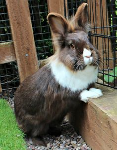 0114d7c5c6 246 Best Bunnies. Bunnies. Bunnies. Bunnies. Bunnies. Bunnies images ...
