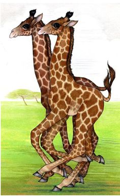 Giraffes too :) tall horses, longnecked horses. Savanna Animals, Cute Animals, Giraffe Art, Baby Giraffes, Robin James, Okapi, Toned Arms, Fauna, Cool Art