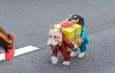 Top+30+des+chiens+déguisés+en+d'autres+animaux+(ouais,+on+sait,+c'est+cadeau)