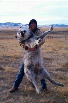 This is messed up. But that wolf is huge.