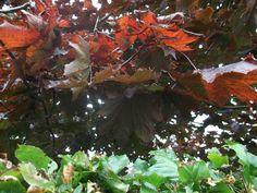 September, Colours, Plants, Plant, Planets