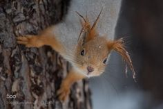 Squirrel in spring by Nika_Zaeva #photography #animal