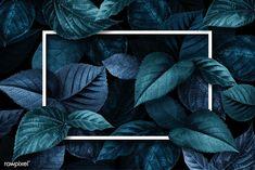 Leaf Background, Background Patterns, Textured Background, Background Images, Computer Wallpaper, Wallpaper Backgrounds, Iphone Wallpaper, Leaf Texture, Tropical Design