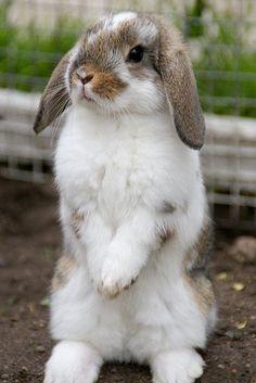 Oh it looks just like my little Cinnabun, whom I lost last year. Sweetest little baby!