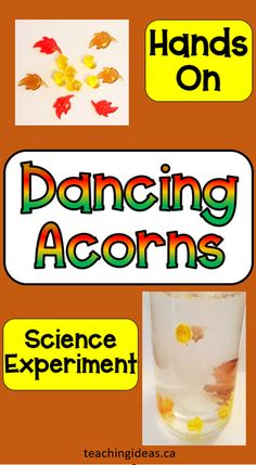 "Have some hands-on fun this fall with this ""Dancing Acorns"" and other fall science experiments for kids. You only need a few materials to create this beautiful science experiment that will keep kids staring in amazement! #autumnscienceexperimentsforkids #fallscienceexperimentsforkids #scienceforkids #scienceexperimentsforkids"