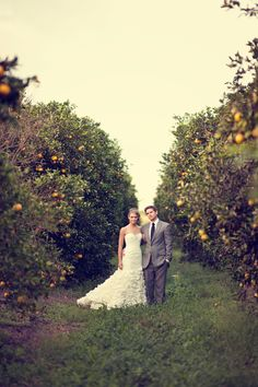 orange grove by IRP....love this photographer