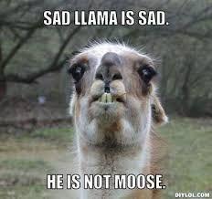 happy llama sad llama - Google Search