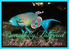 There are a number of beautifully patterned fish that can be found throughout the world, but these five from the Red Sea are some of the most exquisite! http://aquaviews.net/editors-picks/5-beautifully-patterned-fish-red-sea/