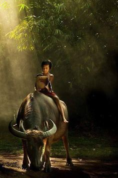 West Java village, Jakarta… My children rode a carabao in the Philippines.