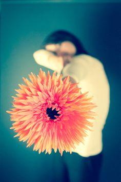 Flower Shot! by Rui Antunes