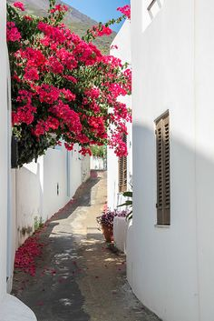 Alley in Stromboli (Italy) by Choupie85 on Flickr.