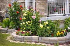 Rose garden with stone landscaping adjoining building