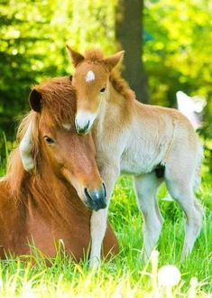 Baby Animals Pictures, Cute Animal Pictures, Horse Pictures, Animals And Pets, Nature Animals, Wild Animals, Most Beautiful Horses, Pretty Horses, Horse Love