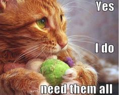 My kitty is a bit like this, is yours?