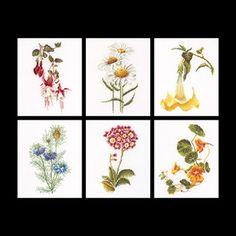 Thea Gouverneur - Six Floral Studies