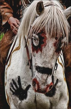 Native American War horse …