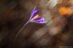 wind's flower