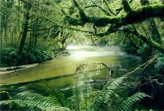 Water Animals in the Rainforest  - Amazon River Dolphin  - Giant South American River Turtle  - Manatee