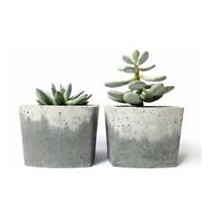 Concrete Pot for Succulent Cactus Grey Urban Industrial Planter Home... ❤ liked on Polyvore featuring home, home decor, plants, gray home decor, concrete planters, concrete pots, cactus pot and succulent pots