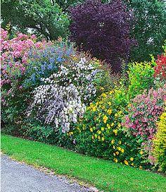 Sommer-Hecken-Kollektion,5 Pflanzen