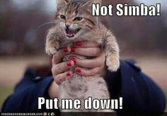 Not Simba! Put me down!