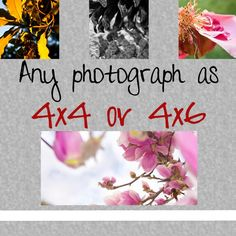 Any image as a 4x4 or 4x6 print by AulaniPhotography on Etsy, $5.50
