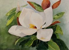 "Watercolor. Original painting  ""Southern Magnolia"". Giclees ( prints) and notecards available for purchase  Watercolorbyhelen@gmail.com"
