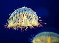 One of my absolute faves, the flower hat jelly.