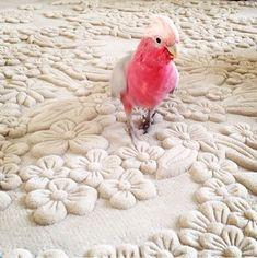 Carpets For Kids, Carpet Manufacturers, Taiping, Living Room Carpet, Custom Rugs, Carpet Runner, Unique Colors, Rugs On Carpet, Shag Rug
