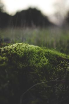 discountable:  deeplovephotography:  portfolio | flickr | facebook | society6   nature