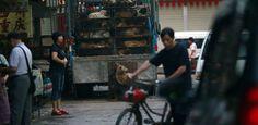 El macabro Festival de Carne de Perro está por comenzar - http://www.absolut-china.com/el-macabro-festival-de-carne-de-perro-esta-por-comenzar/