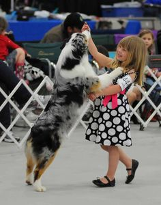 Australian Shepherd ...I don't know that I'd ever want to get into showing, but how freaking cute would K be showing off her puppers!  I think Dakota would be great for her to show....