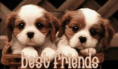 the two best freinds