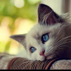 I NEED a cat so bad...