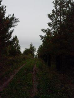 De bosc II