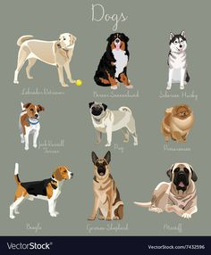 Different type of dogs set isolated Big and small Vector Image - Animals Dog Breeds Chart, Dog Breeds List, Cute Funny Animals, Cute Dogs, Different Types Of Dogs, Dog Types, Dog Anatomy, Dog Commands, Young Animal