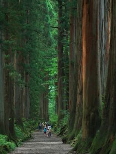 Been there, done that. Gorgeous.Muir Woods, San Francisco, California
