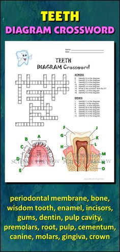 Neuron and Spinal Cord Crossword with Diagram {Editable ...