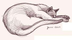 cat sketch drawing - Google Search