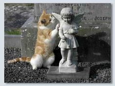 Cat in an Irish Cemetery. I totally love the idea of covering your grave in catnip, so you'll never be short of company in your grave...and cats beat relatives any day.