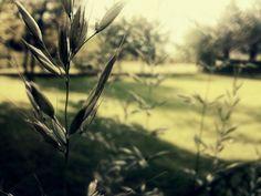 Camera Roll | Flickr