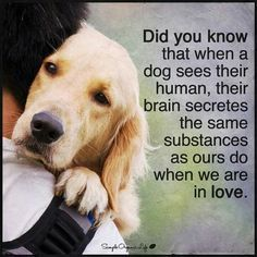 Did you know that when a dog sees their human, their brain secretes the same substances as ours do when we are in love.