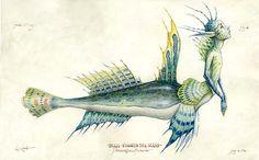 Merfolk Spiderwick | Anatomia interna de una sirena 2