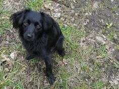 This is breed I want in the future! - markiesje by Dondersteen, via Flickr