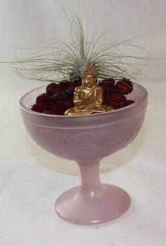 Tillandsia Argentea & Little Zen Garden